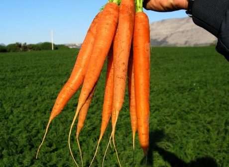 Report carote 002
